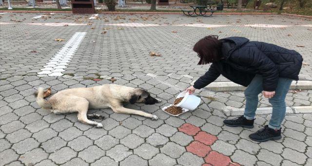 Kahramanmaraş Halkı Sokak Hayvanlarını Yalnız Bırakmadı
