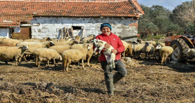 Sosyal Medyada Gündem Olan Havranlı Şevki Savra'nın Koyunları Sigortalandı